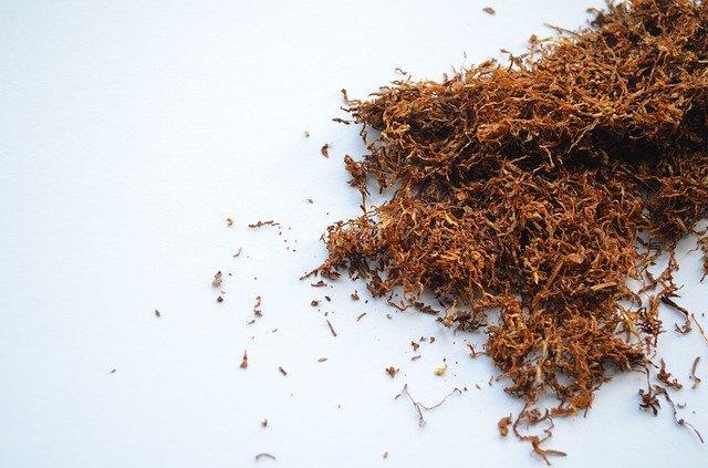 Tobakens biologi